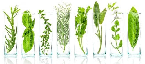 plant-extract