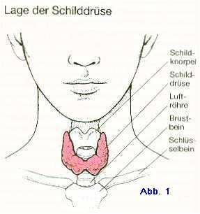 Lage-der-Schilddrüse